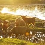 highland serenity